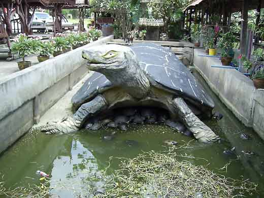 La magie du bouddha for Bassin exterieur pour tortue