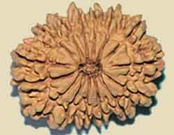 Vertus des graines Rudrakshas 15-mukti
