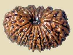 Vertus des graines Rudrakshas 16-mukti