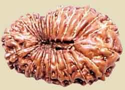 Vertus des graines Rudrakshas 20-mukti