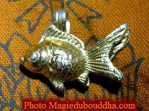 La magie du bouddha for Prix poisson rouge 20 cm