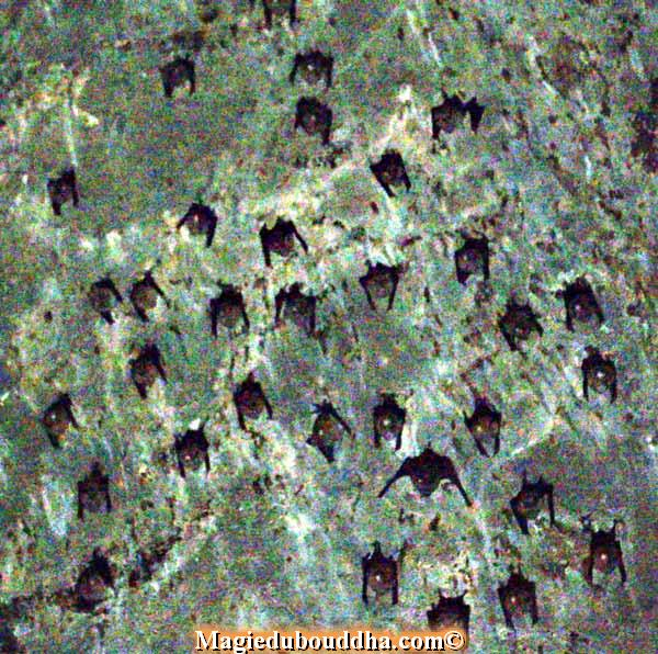 cave bats thailand