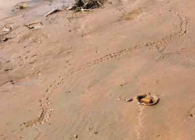 traces de nagas