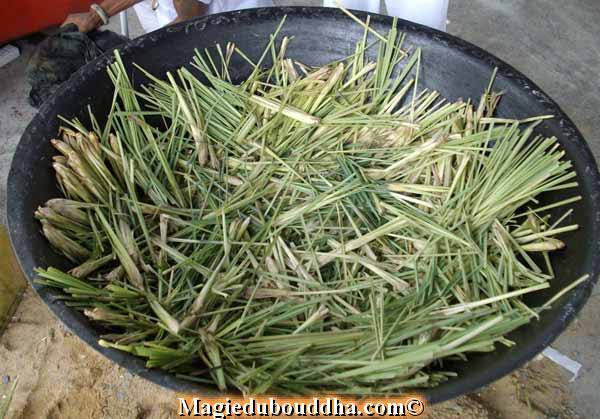 lemongrass in ritual thailand